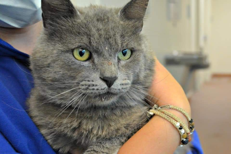 Handsome boy SOLDIER is at NORTH #Utah VALLEY ANIMAL #GASSING CHAMBER SHELTER. https://t.co/iko5XOQPAq https://t.co/a904m3vThK