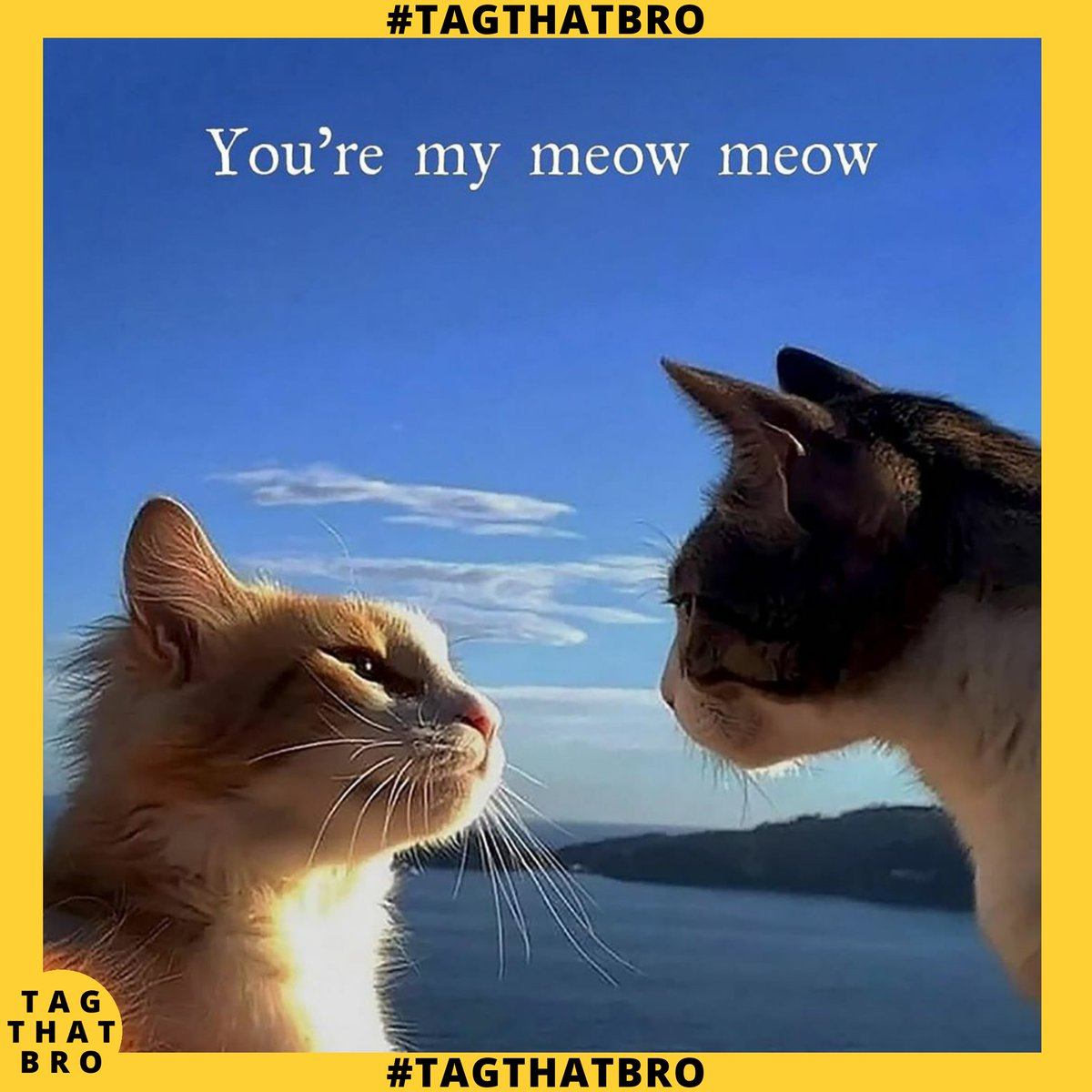 Tag That Bro - Follow us @tagthatbro  #tagthatbro #memes#dankmemes #memes#memesdaily #memesespanol #memestagram #funnymemes #edgymemes #memester #memesdank #memesfordays #memeschile #memesfunny #dailymemes #memess #memestar #memestagram #memesrlife #memesquadpic.twitter.com/PXt41YZtca