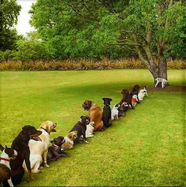 Top story: @wineworldnews: 'The problem after the independence day party have a nice sunday #wine #winelover #dogs @Berti_and_Ernie @TedNguyen @MrScottEddy @winewankers @tinastullracing @Dracaenawines @JMiquelWi… pic.twitter.com/xbbvPFEkWT, see more http://tweetedtimes.com/campochiarenti?s=tnp…