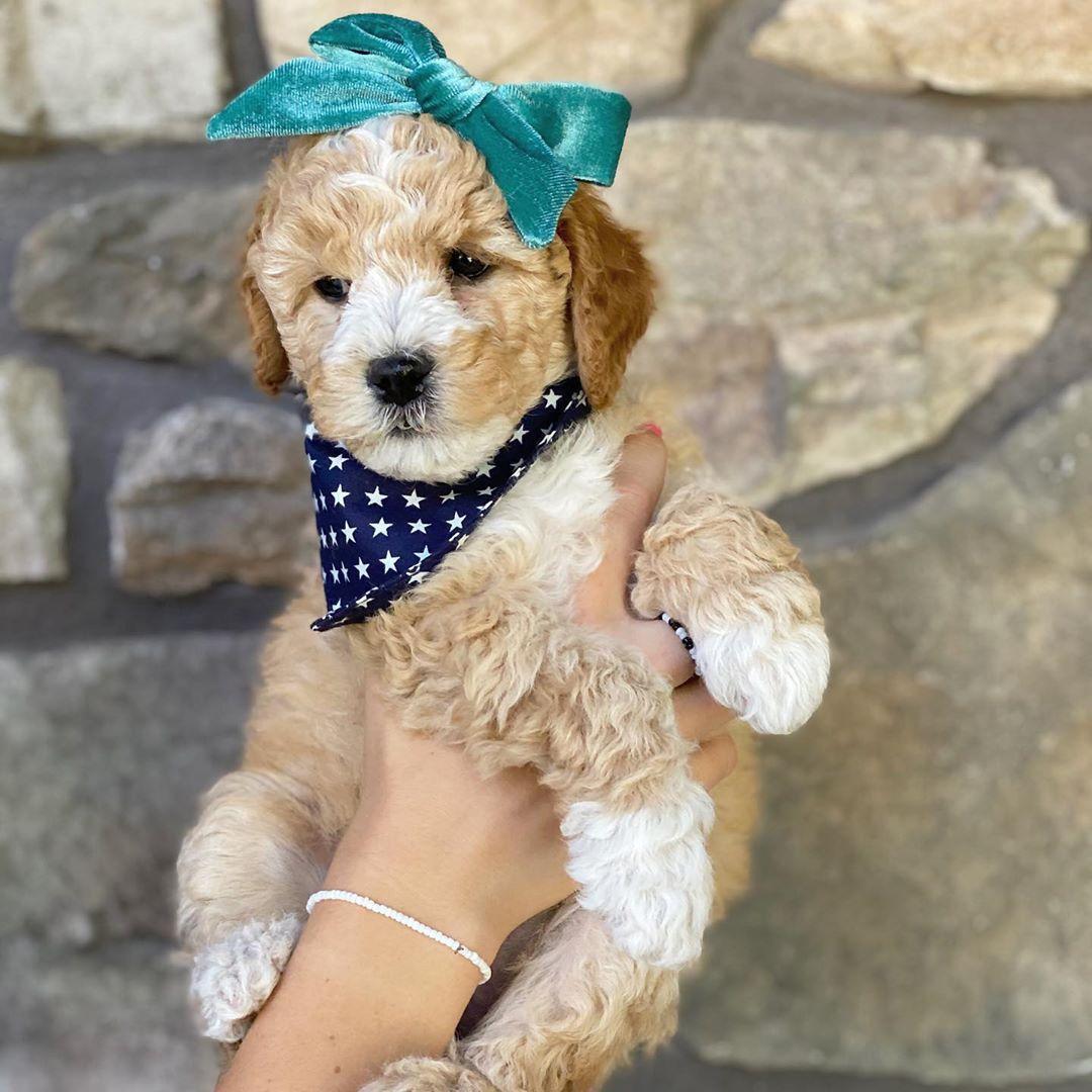 Baby! #dogs #dogsofinstagram #dog #dogstagram #puppy #instadog #doglover #dogoftheday #pets #doglovers #love #doglife #puppies #pet #cute #puppylove #dogsofinsta #of #puppiesofinstagram #doggo #ilovemydog #petsofinstagram #animals #dogslife pic.twitter.com/e8acOmdwjo