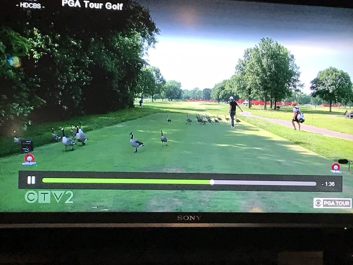 @PGATOUR @GolfCanada @CBSGolf @frank_nobilo 3rd Round of the PGA Rocket Classic in Detroit yesterday. Canada Geese had to be cleared from the 16th tee box. Frank Nobilo says, they are Canada Geese and Canada is actually south of where we are. You are so right, Frank. Good man. pic.twitter.com/3hIXA6yxN2