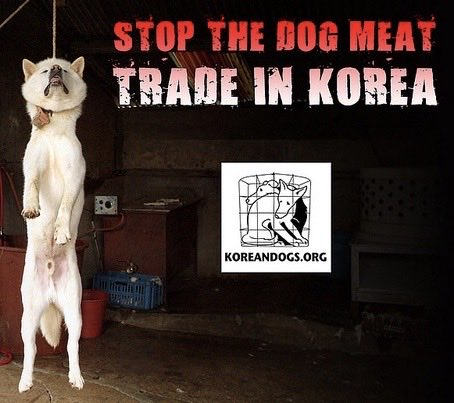 @MaryJoe38642126 @koreatimescokr @NamiKim_DogsSK #SouthKorea, you should think about stopping #torturing #animals and better implement #laws for their #protection and #welfare. Your #slaughterhouses are the dirtiest #places in the #world, they are a matter of #publichealth. #Ban #Boknal, is #hell. https://t.co/OMlVW5r5F6
