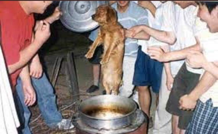 @MaryJoe38642126 @UPI @NamiKim_DogsSK #SouthKorea, you should think about stopping #torturing #animals and better implement #laws for their #protection and #welfare. Your #slaughterhouses are the dirtiest #places in the #world, they are a matter of #publichealth. #Ban #Boknal, is #hell. https://t.co/zHr0JfAUKw
