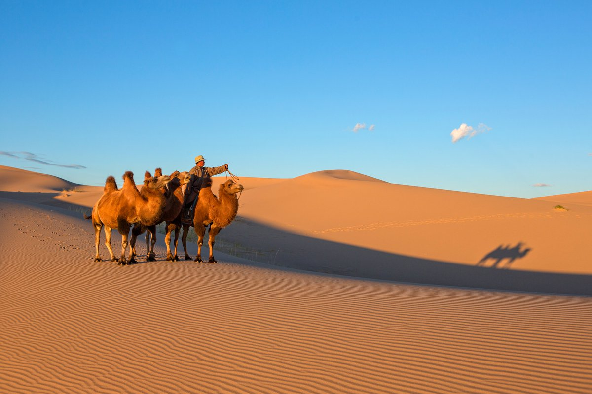 Өмнөговь аймаг Сэврэй сумын тэмээчин залуу. https://t.co/ccOcFgde8Z