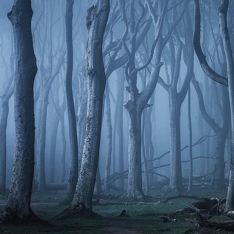 a cool #darkness in the beautiful forest. via: heikogerlicher  #germany  pic.twitter.com/zzEwrRQWZb