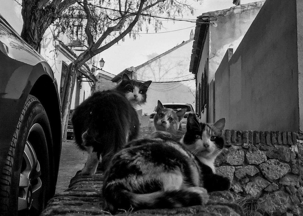 のらねこ三兄弟。 - #toledo-   #猫 #東京カメラ部 #キリトリセカイ #ファインダー越しの私の世界ᅠ  #写真好きな人と繋がりたい  #スペイン  #白黒写真  #旅行記  #bnw  #blackandwhite