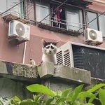 顔の模様のせいで?悲しみが深くみえてしまう、猫がいた!