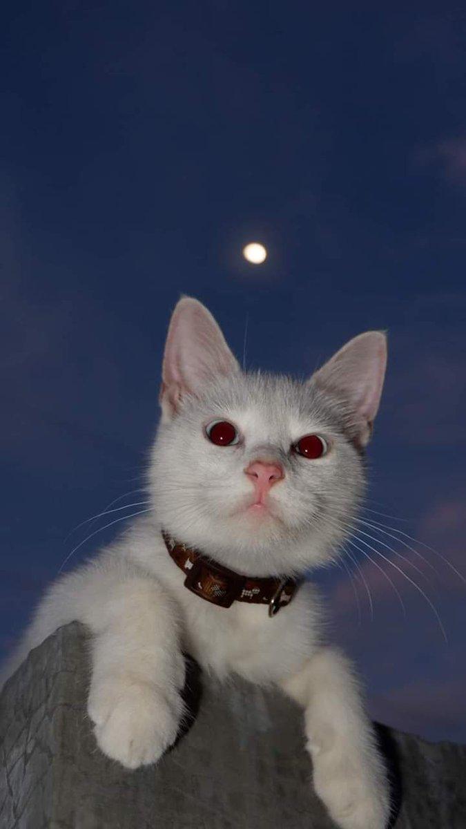 Para los amantes de la Luna 🌕❤️ https://t.co/PVvU9ujePs