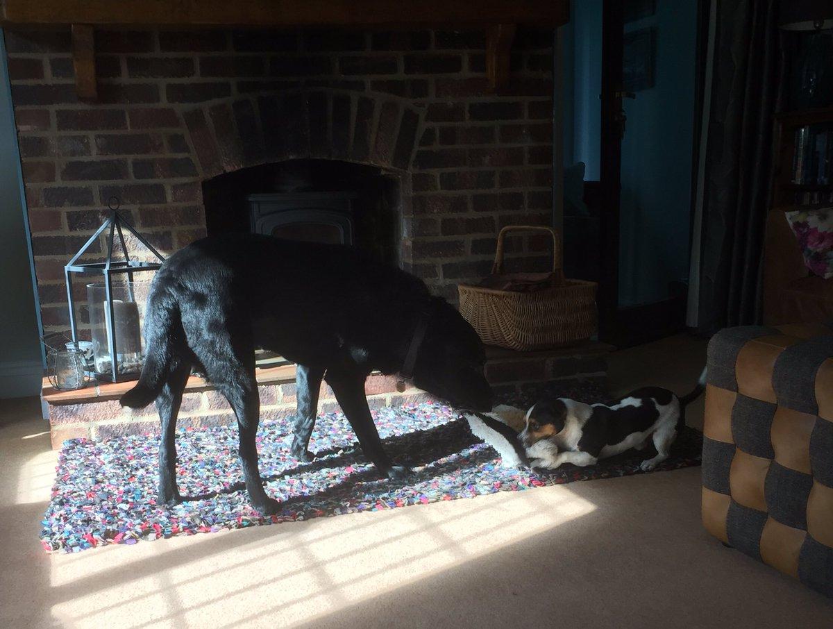 The boys entertaining themselves this morning #dogs #dogslife #DogsofTwittterpic.twitter.com/3SBWmZ6LhE