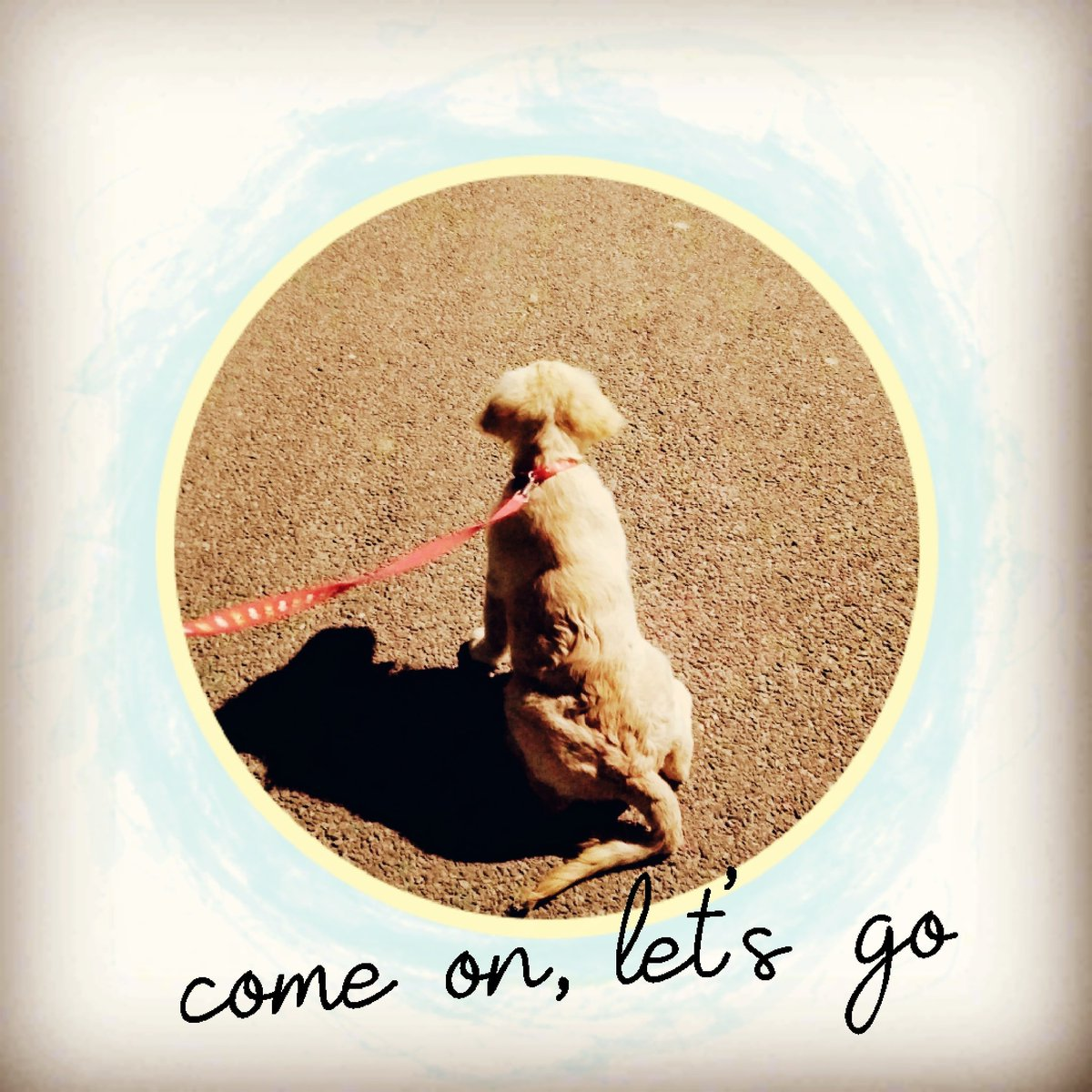 https://instagram.com/babysimba000?igshid=ttvm9i8uim1y… #goldenretriever #ArmyBra #QuarantineLife #puppylove #playtime #woofwoof #dogsofinstagram #SimbaaBaby #Dogsotwitter #puppylove #puppylife #dogoftheday  #ilovemydog #barkingdivas #doglove #dogsitting #dogsmile #pawsitivevibes #goldenretrieverpuppyspic.twitter.com/lzJ6b3qdjm