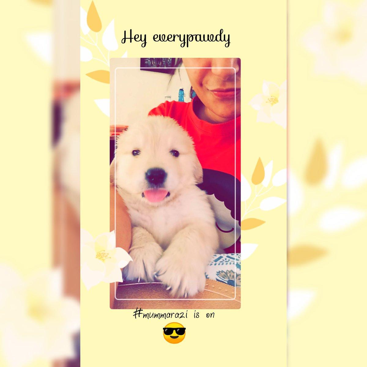 https://instagram.com/babysimba000?igshid=ttvm9i8uim1y… #goldenretriever #ArmyBra #QuarantineLife #puppylove #playtime #woofwoof #dogsofinstagram #SimbaaBaby #Dogsotwitter #puppylove #puppylife #dogoftheday  #ilovemydog #barkingdivas #doglove #dogsitting #dogsmile #pawsitivevibes #goldenretrieverpuppyspic.twitter.com/t2LMquiBlN