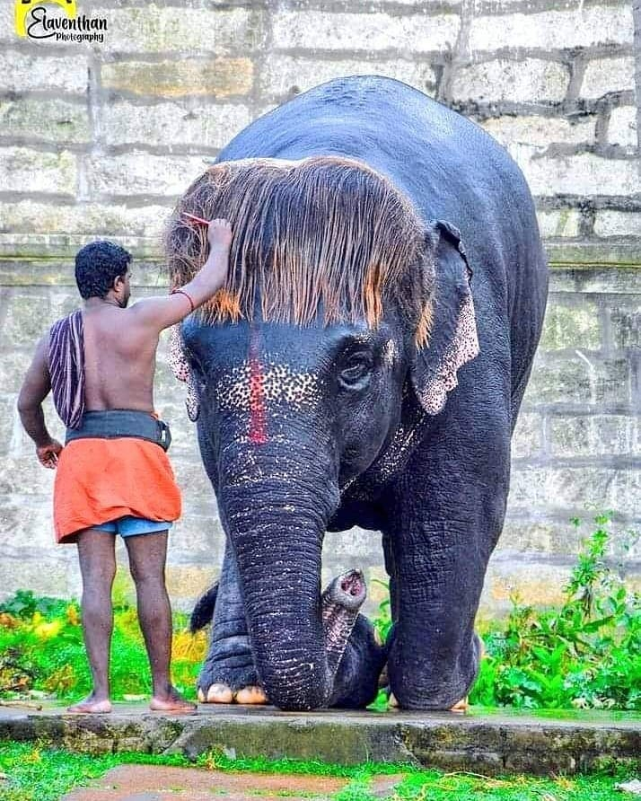 """She is famously known as """"Bob-cut Sengamalam"""" who has a huge fan club just for her hair style. You can see her at Sri Rajagopalaswamy Temple, Mannargudi, Tamilnadu. Pics from Internet. https://t.co/KINN8FHOV3"""