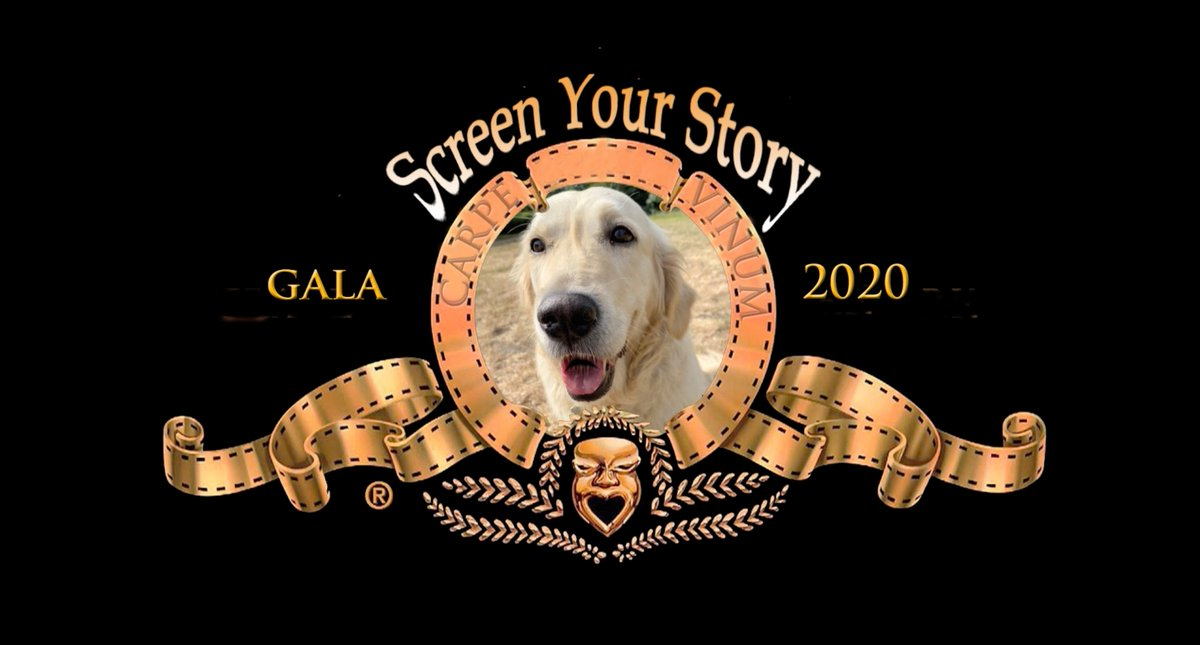 Join us today at 4pm for the Screen Your Story 2020 Gala - youtube.com/channel/UCkBUo…