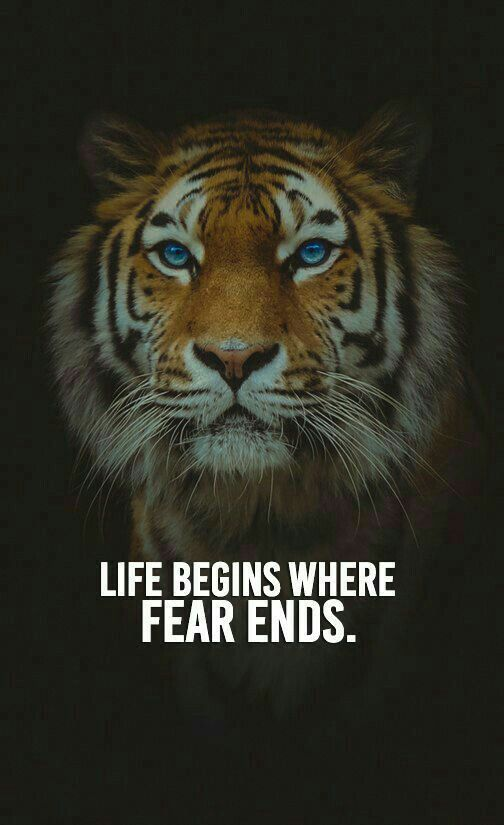 ~ Life begins where fear ends.~ . . . #animals #animalwelfare #animallovers #love #protection #saveasoul pic.twitter.com/IyalMXVORk