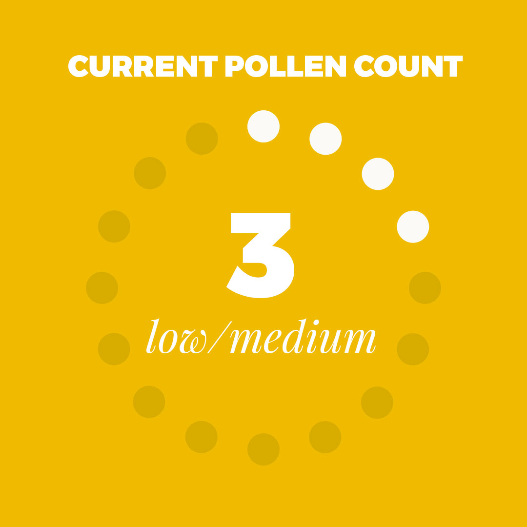 Happy Sunday and Happy 4th of July Weekend!. Here is today's #pollen outlook! Low to medium levels today - mostly just grasses.  . . . #clt #charlottencpic.twitter.com/ANZoq8bcfJ
