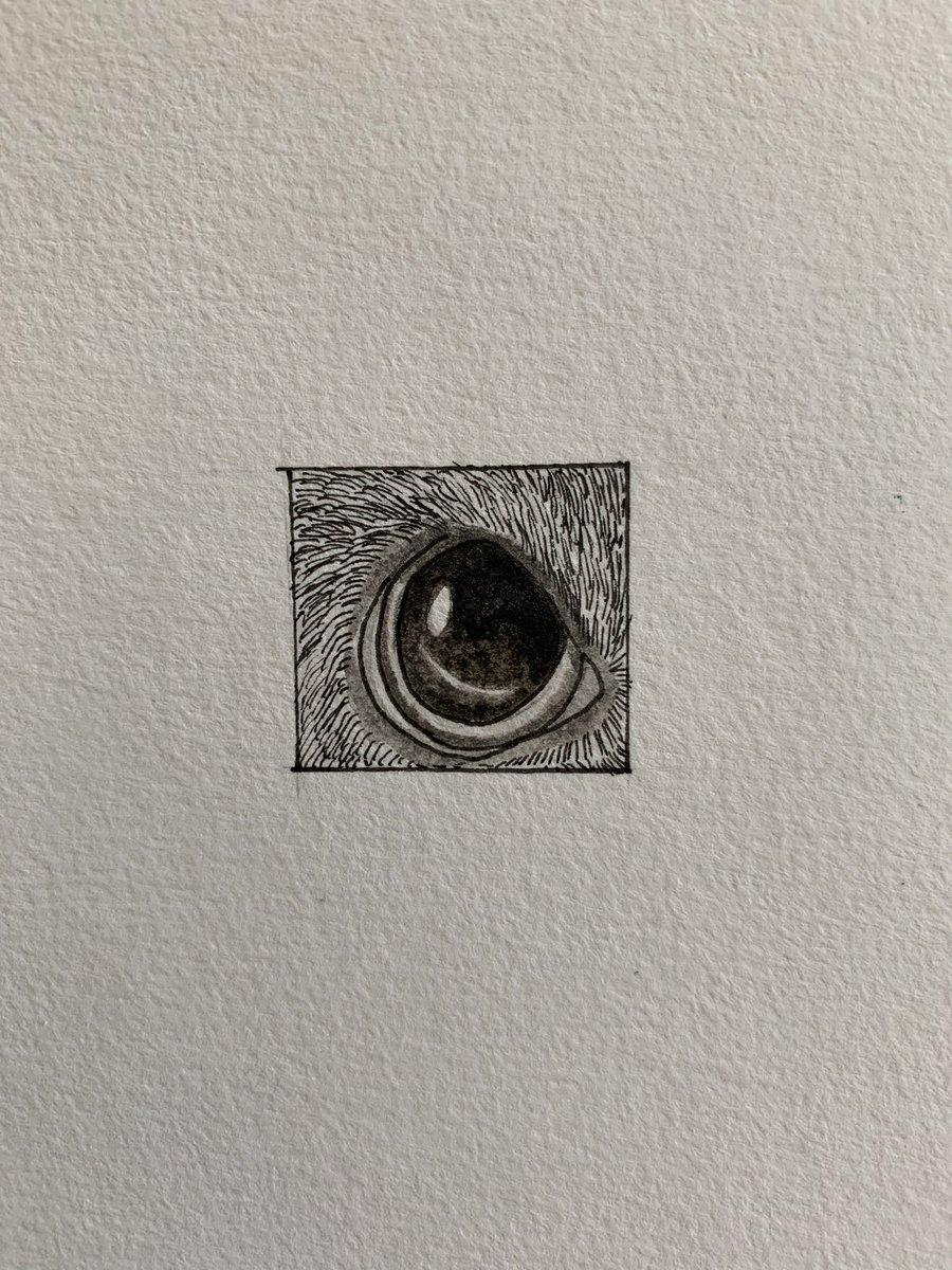 Inktober52 prompt: eyes #Illustrations #ink #inktober52 #Inktober #eyes #eye #dog #draw #drawing #Illustrator #illustrationartpic.twitter.com/74Nl6BLDck