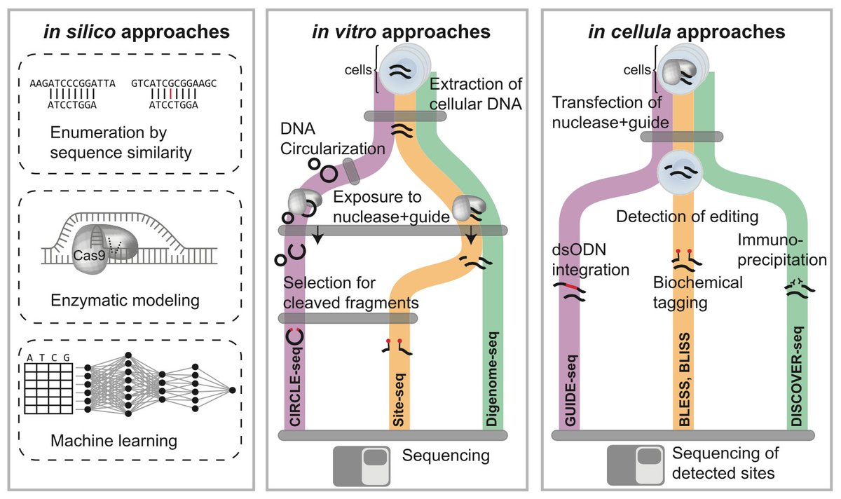 New review article from @lpinello & colleagues in @MolecularCell: Technologies and Computational Analysis Strategies for CRISPR Applications https://t.co/pL6JVXXo3H https://t.co/hZiGvKHAhq