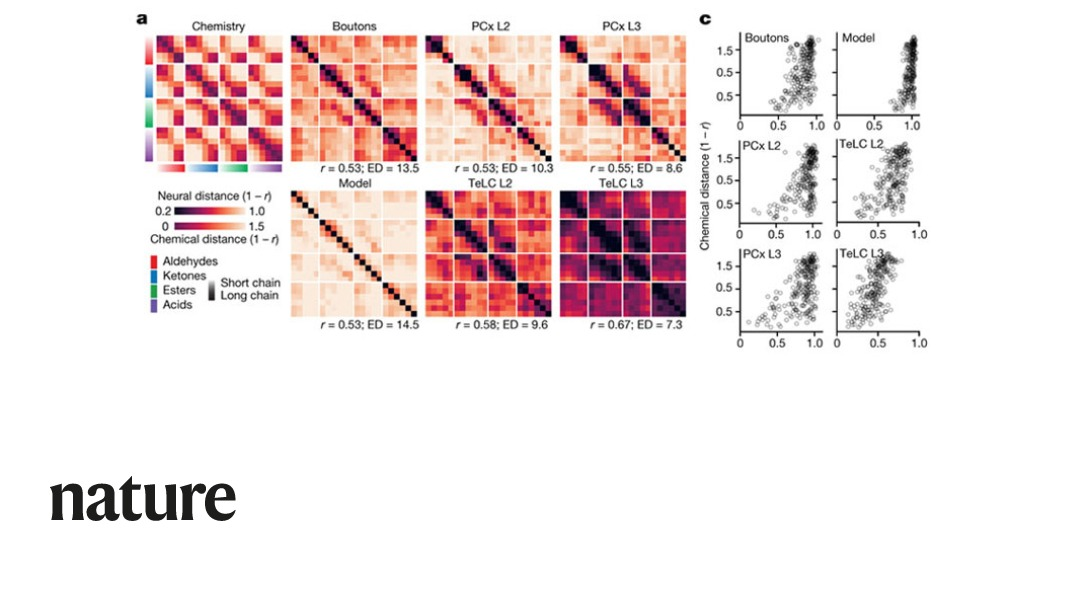 A study published in Nature shows that both the piriform cortex and its sensory inputs from the olfactory bulb represent chemical odour relationships through correlated patterns of activity. https://t.co/zkwsdWfmR4 https://t.co/SZW510TwIS