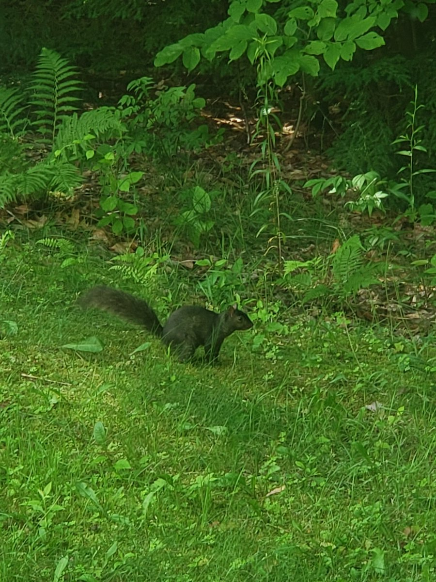 This little guy's family has always lived in the tree outside of parents place pic.twitter.com/lRr7IRtv4C