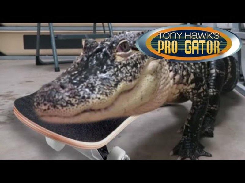 this gator is rad as heck https://t.co/0C4jTUn6aT