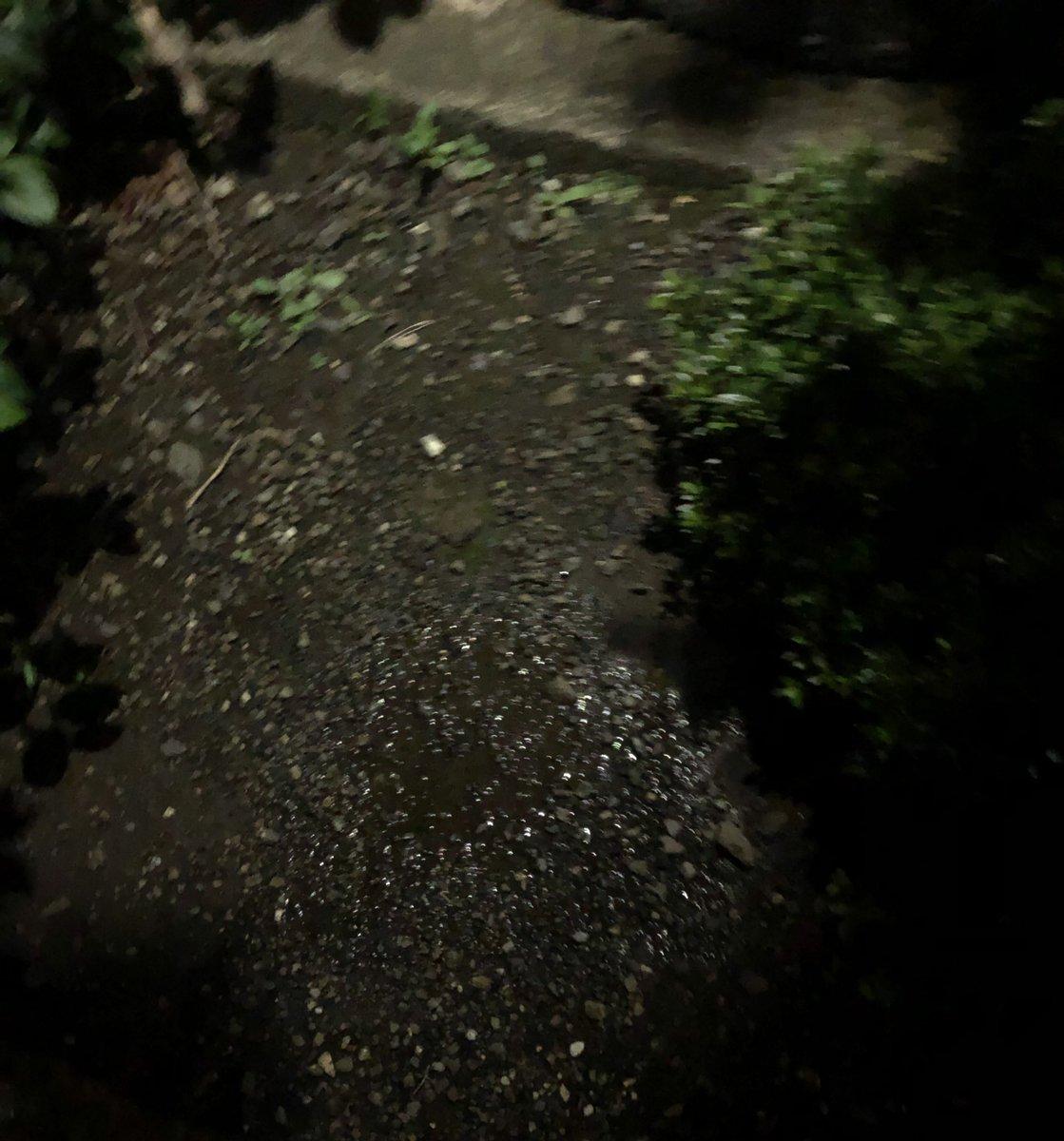 雨降ってなかったから久しぶりにおしっこ! 街灯に少しだけ照らされてたからドキドキしちゃった フラッシュで撮ったらわかりづらかったからフラッシュじゃないバージョンも撮ってみました  #おしっこ #野ション https://t.co/Ct0fEC6plg