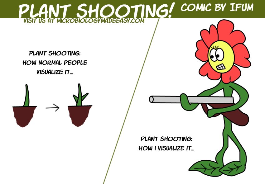 This is ridiculous!  #plants #botany #flower #shooting #guns #plantviolence #memepic.twitter.com/wcL7oiKVxZ