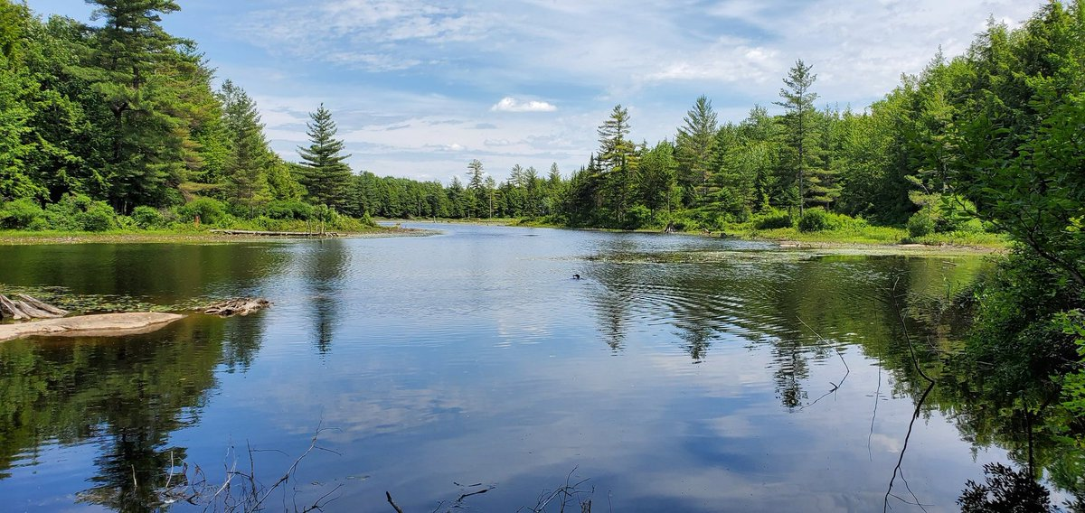 The loon came calling today. Mud Pond, Belfort, Lewis County NY #ADK<br>http://pic.twitter.com/lkRBfynerM