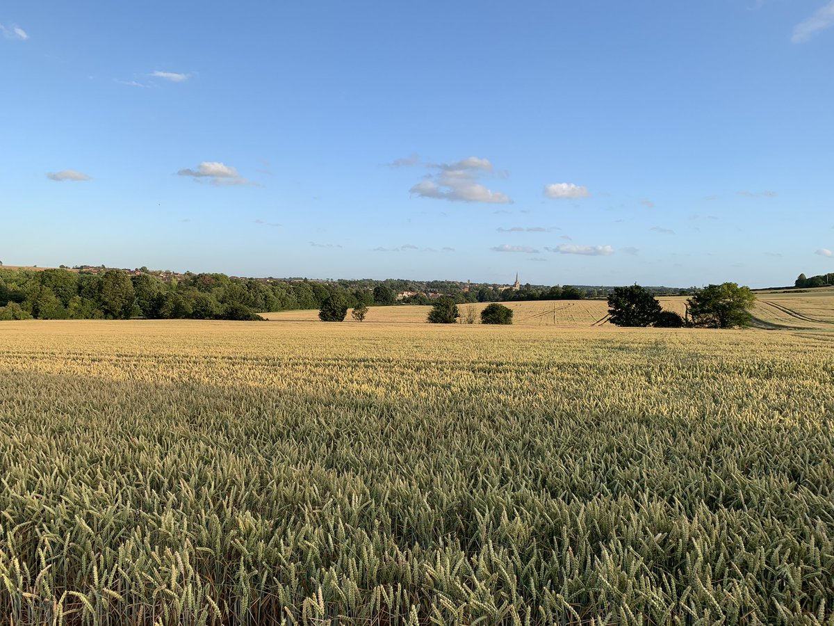 Beautiful #SaffronWalden in the evening sun. Does not get much better than this! @swtic<br>http://pic.twitter.com/6hQDPYwv2P