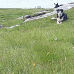 Image for the Tweet beginning: #orchids and #collies. What more