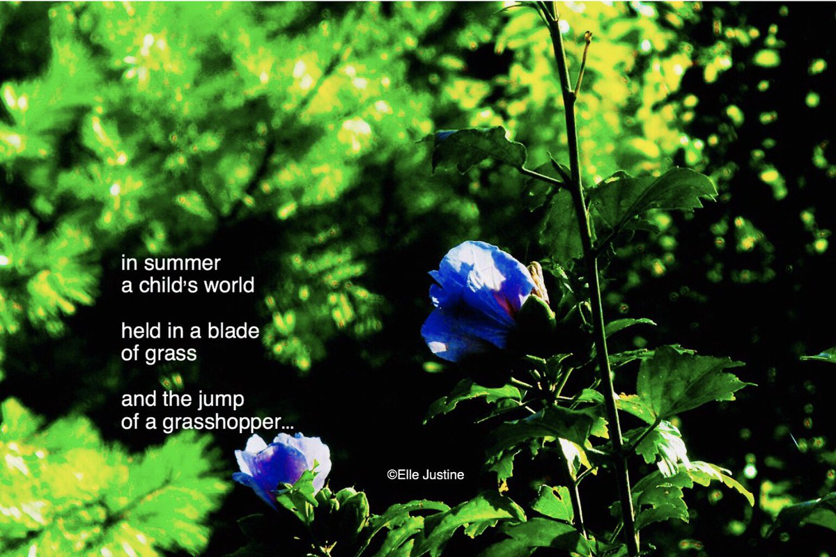 in summer a child's world held in a blade of grass and the jump of a grasshopper...#micropoetry #5lines<br>http://pic.twitter.com/lcCLBWv6IQ