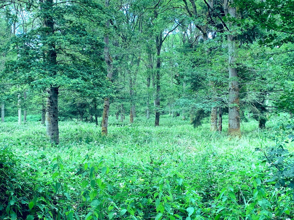 Yet another beautiful and peaceful woodland escape discovered today. One real bonus of lockdown has been finding all these wonderful countryside walks that have been on our doorstep all this time #saffronwalden #greatoutdoors<br>http://pic.twitter.com/sMfLOf3qpE