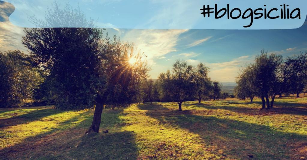 """""""Per quanto un albero possa diventare alto, le sue foglie, cadendo, ritorneranno sempre alle radici.""""  Buonasera da #blogsicilia"""