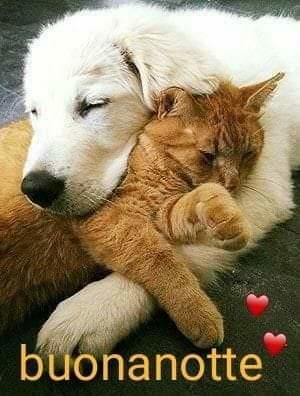 @annalisalisi072 Buona serata e sogni belli per dopo Annalisa. Un abbraccio grande con tutto il mio affetto. A presto pic.twitter.com/P6pzkRwjkL