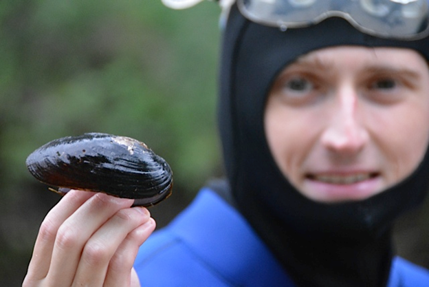 Steven Brownlee (@sfbrownlee) is a gay freshwater ecologist! I'm modeling the invasion of dreissenid mussels in BC, working in the Côté and Moore labs. I can usually be found hunched in front of a laptop, pretending that looking at lakes from space still counts as fieldwork! pic.twitter.com/551j9fIcyb