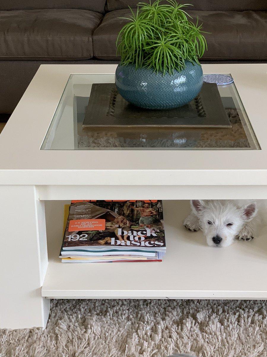 test Twitter Media - Hierbij de nieuwste lifestyletip! Neem wel een hondje in de kleur van je interieur, of een die matcht met de basiskleuren. Belangstelling voor meer tips en filmpjes? Die vind je in mijn stories op Instagram https://t.co/SMG5rz8PoW