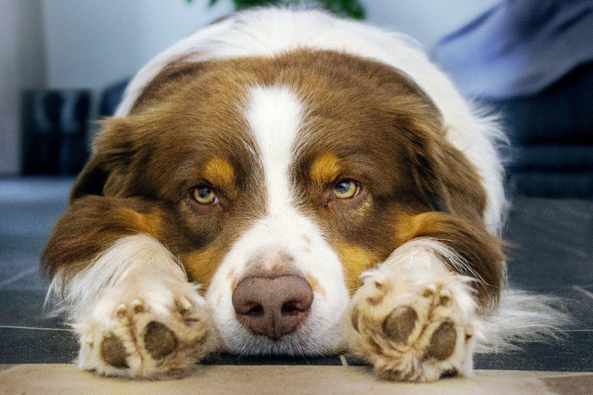 #dog #dogs #hund #doglover #dogphotography #dogstagram #doglife #dogoftheday #doglove #doglovers #hunde #pet #pets #dogmodel #petlovers #petlover #haustier #haustiere #animal #tier #animals #animalphotography #animalloverspic.twitter.com/ywOjlegocn