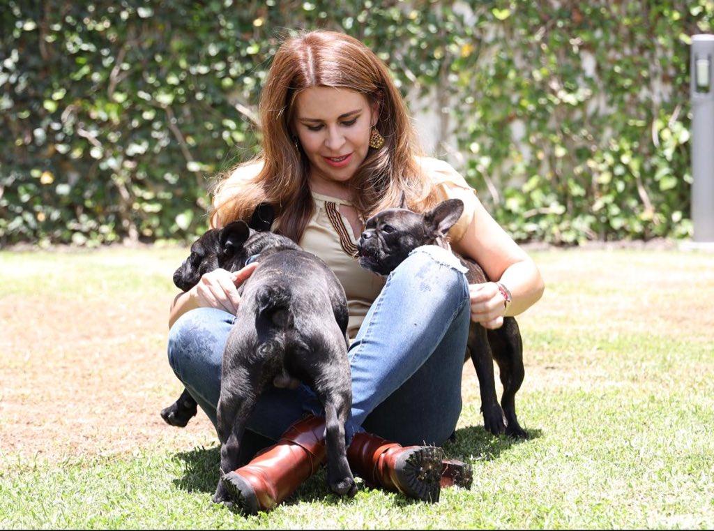 Nuestras mascotas son una gran compañía durante el confinamiento; Jack y Lucy me enseñan todos los días sobre cariño, lealtad y amor incondicional.    Agradezcamos todo lo que nos dan con amor y cuidados.  ¿Tienen mascota?, ¡Compártanme fotos! 🐾 https://t.co/QaroPrUasf