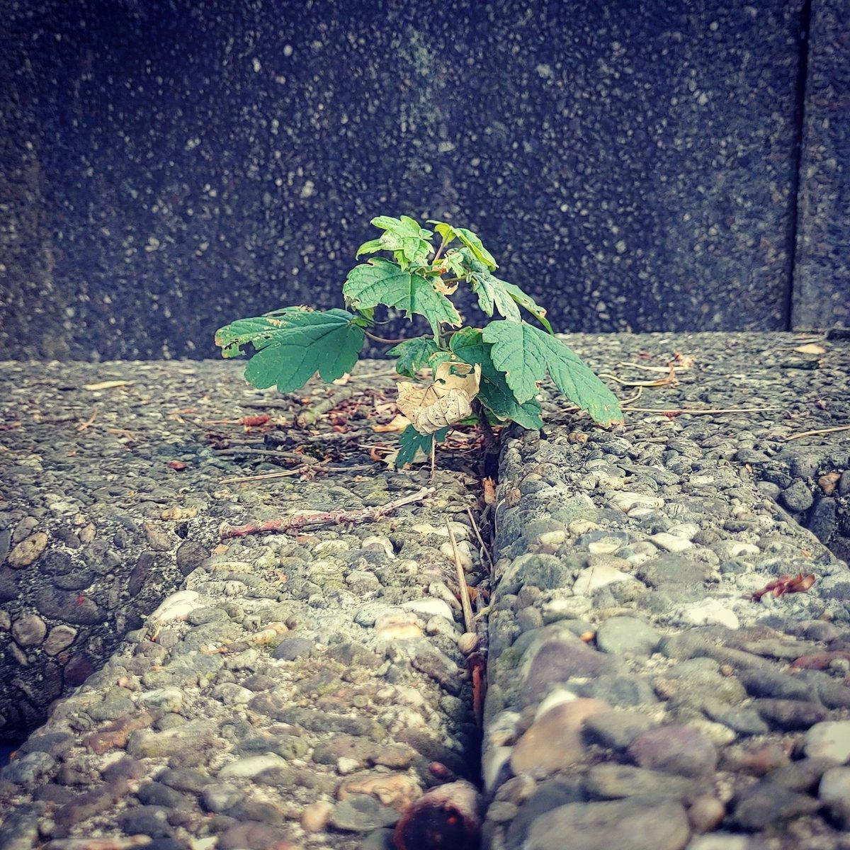 Manchmal reicht die Hoffnung, um etwas entstehen zu lassen, was unmöglich scheint.   #philosophie. #photography #gutenacht #nachdenklich #naturfotografie_deutschland #stadtfotografie #bilderkunst #fotografie #schlafen #ahorn #streamer #twitchstreaming #twitchtvpic.twitter.com/31z3wS34wX