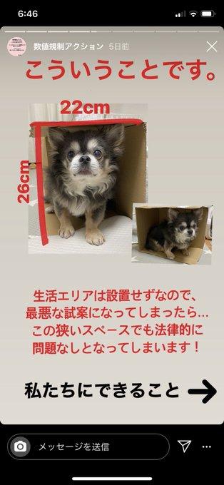 4 pic. 犬猫適正飼養推進協議会などのペット業界団体から今より酷い数値規制の試案がされました。6月中になってるけど7月10日まで受け付けしてくれるみたいです!今動かないと今後10年変わりません。どうかRTとメールの〈名前〉の部分を本名にして送って下さい🙏🏽  #数値規制