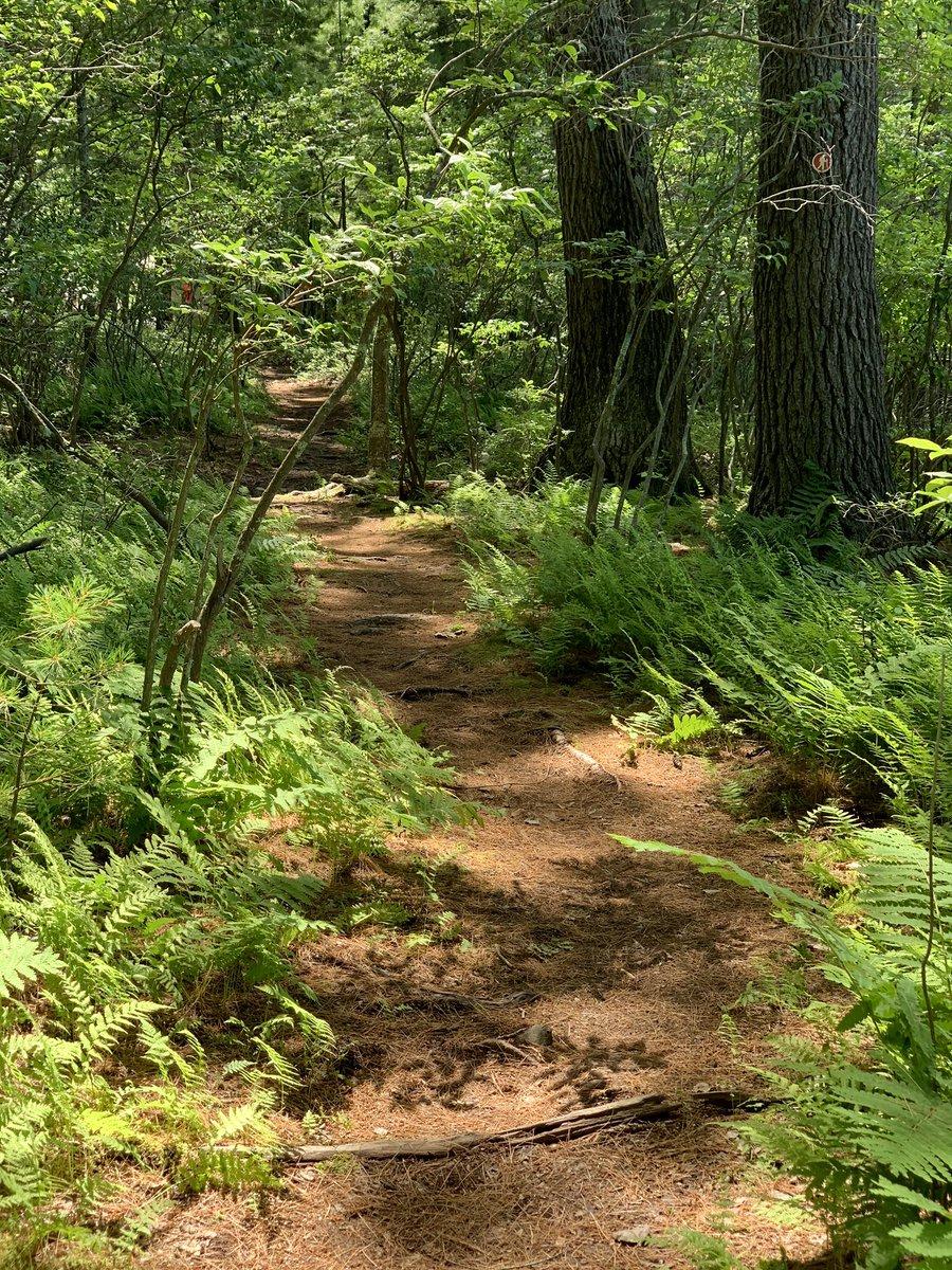 Into the woods. May never return https://t.co/UXjIYfLufA