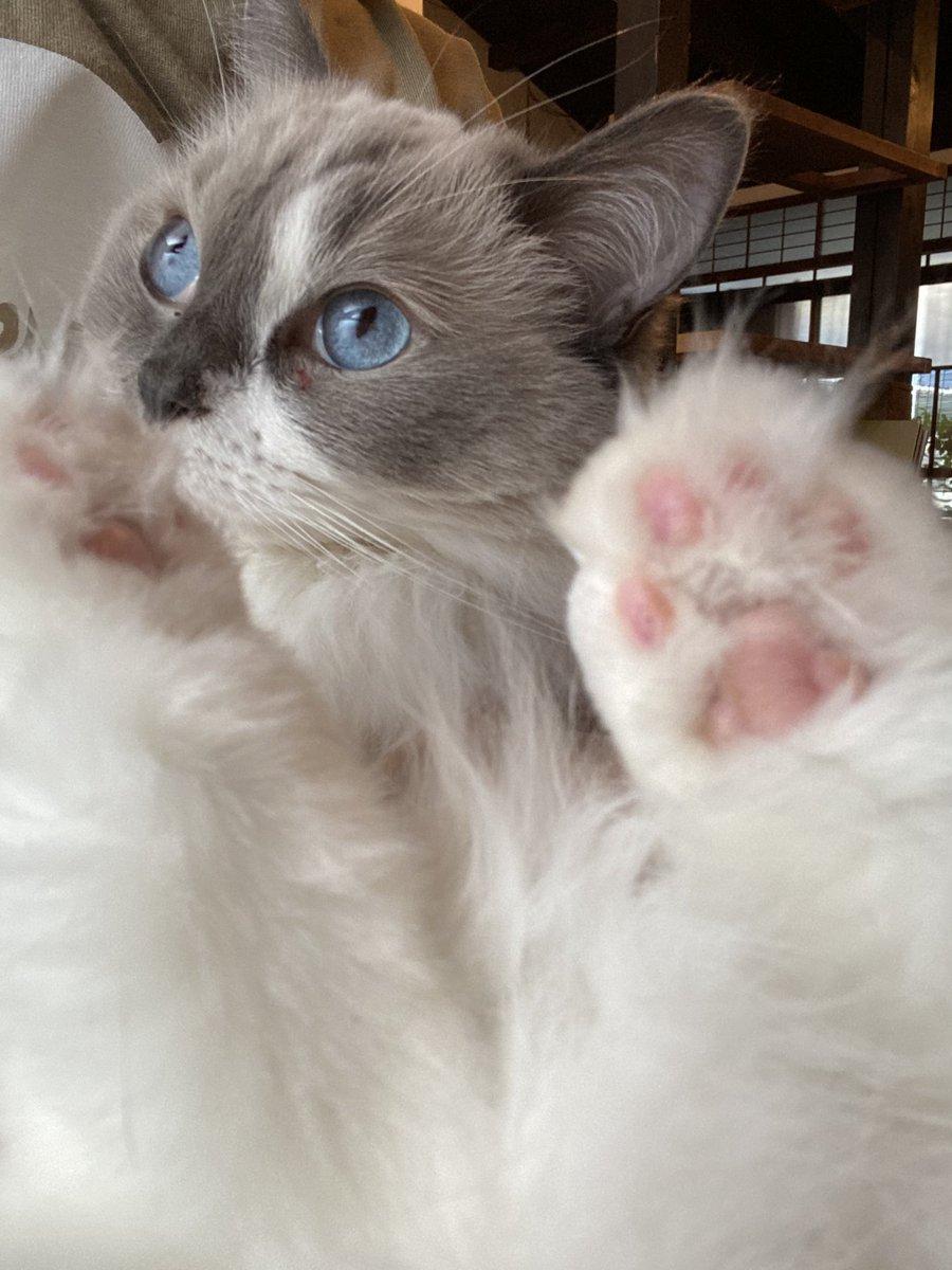 姫の足の指毛✂️バイバイ