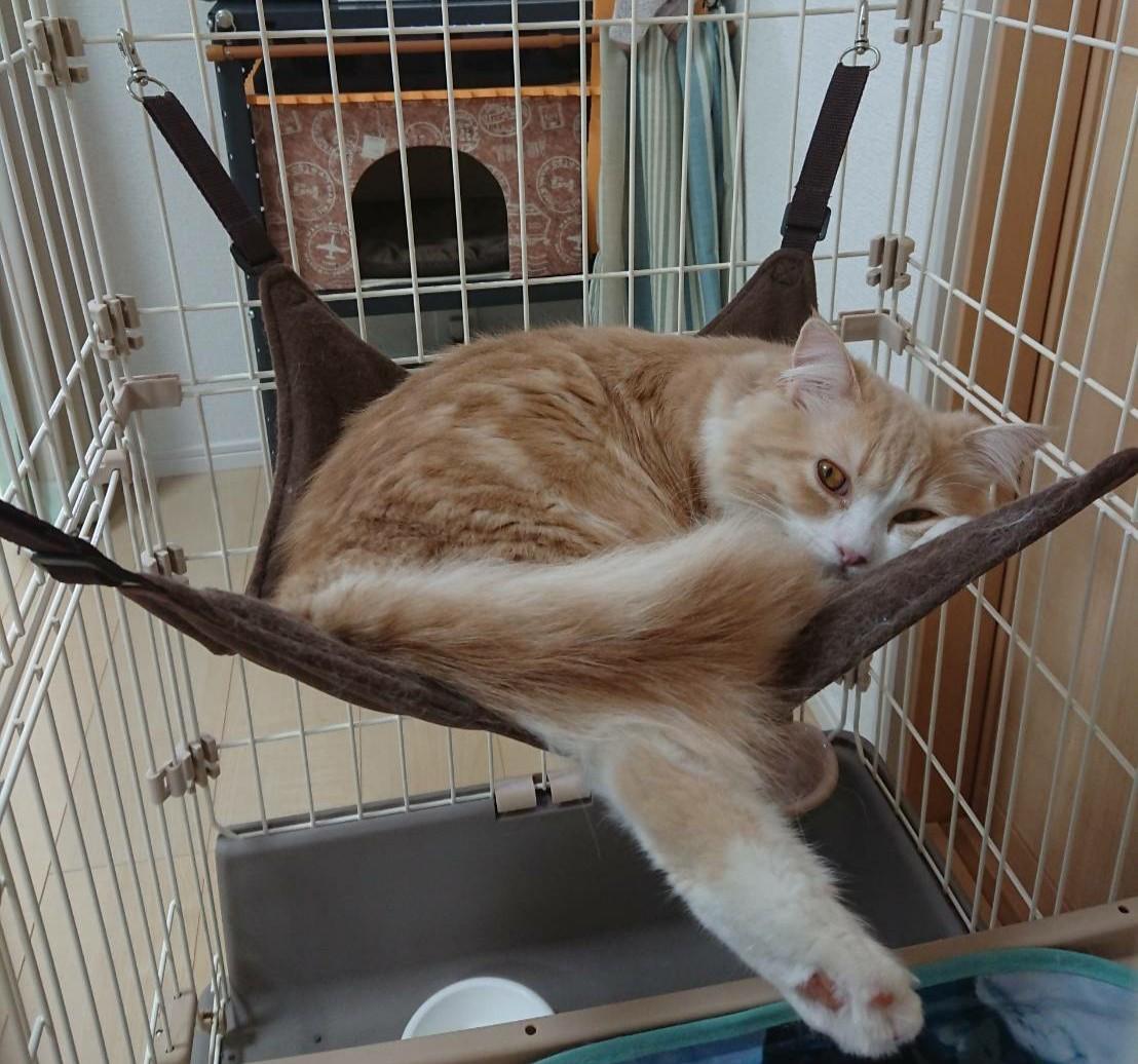 昨日取り付けたハンモック。 使ってくれたー😸✨ このあと爆睡してました😪💤  #スコティッシュフォールド  #ハンモック #にゃんモック #ニャンモック #猫好きさんと繋がりたい  #猫のいる暮らし  #フォローしてくれたら嬉しいです  #子猫  #こねこ https://t.co/A5mmrNpR94