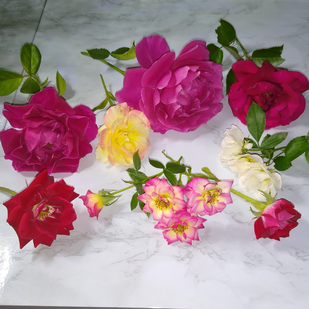 Rose hauls from the rose garden makes all the maintenance worth it. 🌹😍 #roses #flowers #gardening #garden #gardeners #plants