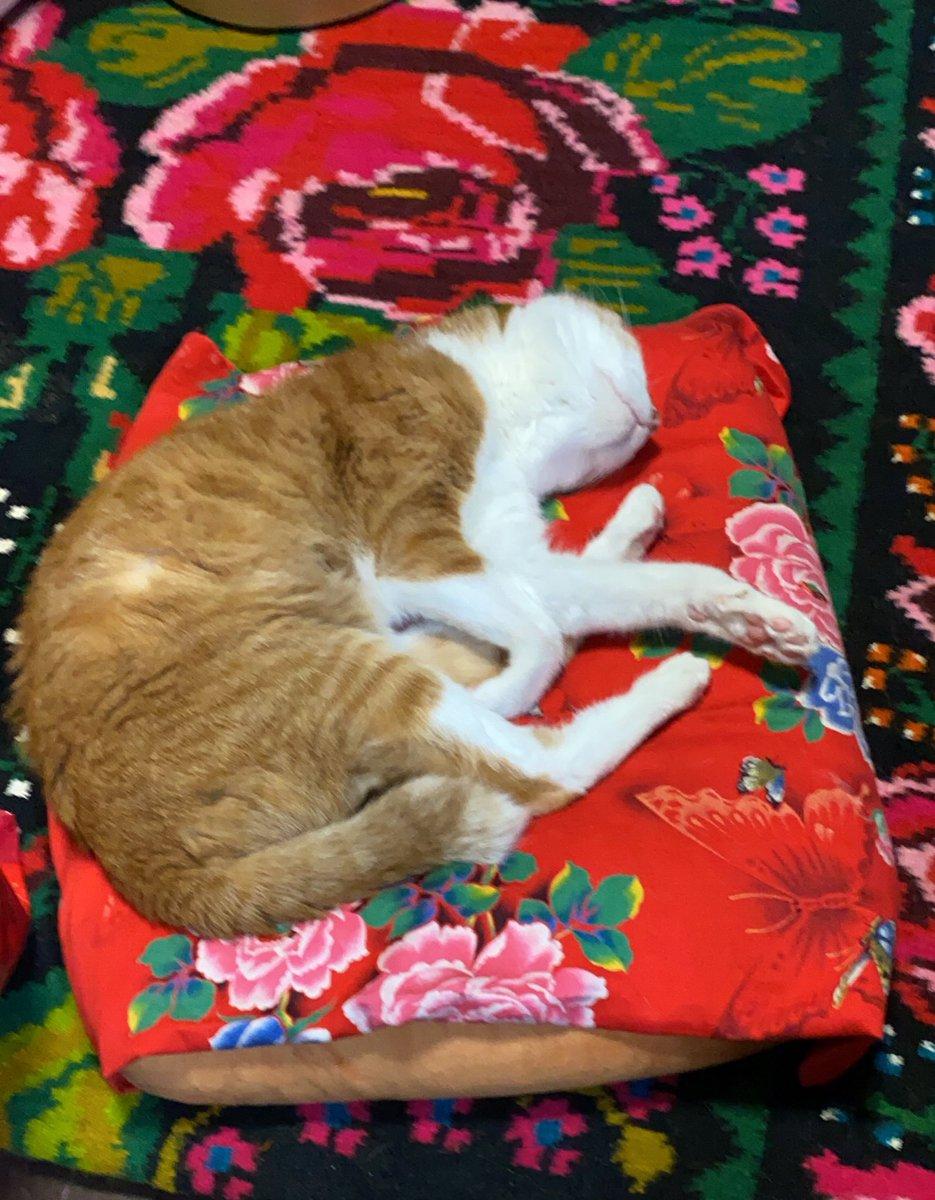 ボリスさんは食事の後の睡眠タイムです。羨ましい…