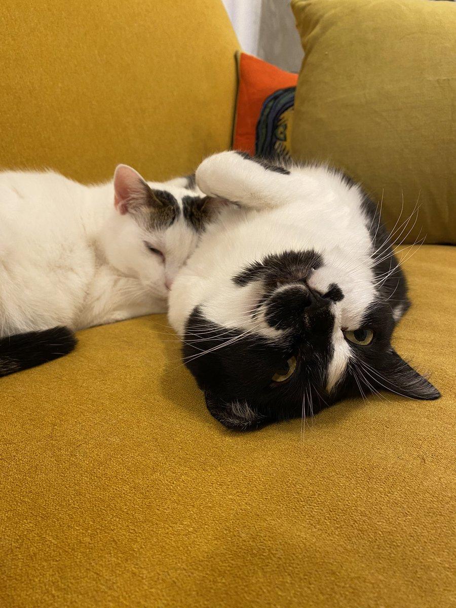 夜は自己嫌悪で忙しい仲間がいっぱいいた!よかった٩( ᐛ )و励ましてくれる方ありがとうございます!冗談のつもりでただただ失礼な発言してたりするので注意深く生きます。もしリアル知り合いの方が見てましたら、今後私が失言したときはその場で殴ってください。猫。