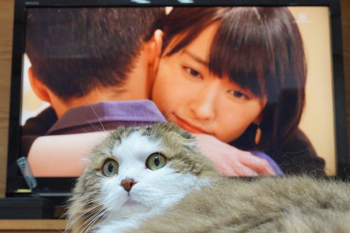 みくりさんに「ぎゅ~♪」される猫  #猫 #スコティッシュフォールド https://t.co/Xaq4kpeBmt