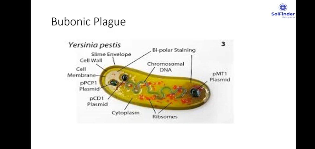 Alerts#bubonicplague found in Chinapic.twitter.com/R2NAP7uJXm