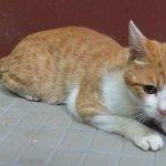 ネコのホープくん・和歌山県湯浅保健所で保護!飼い主さん迎えに来てください!