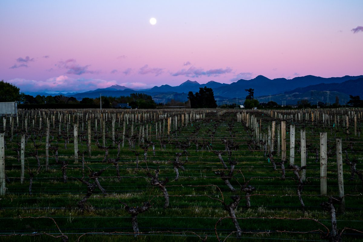 Views over the vines don't get much better than this!  #craggyrange #nzfood #hawkesbay #nzwine https://t.co/bSjijXlKI6