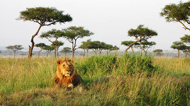 The king is here!  Good morning and happy new week #Kenya #Africa https://t.co/M4JXeRvTFC